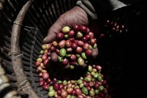 coffee-Indo
